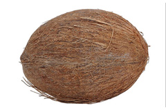 Week 24 baby fetus size coconut